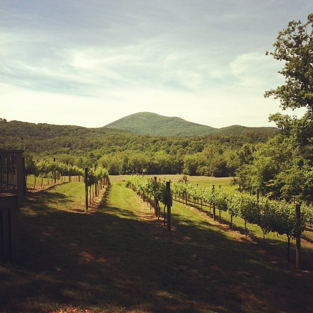 Sautee Nacoochee Vineyards